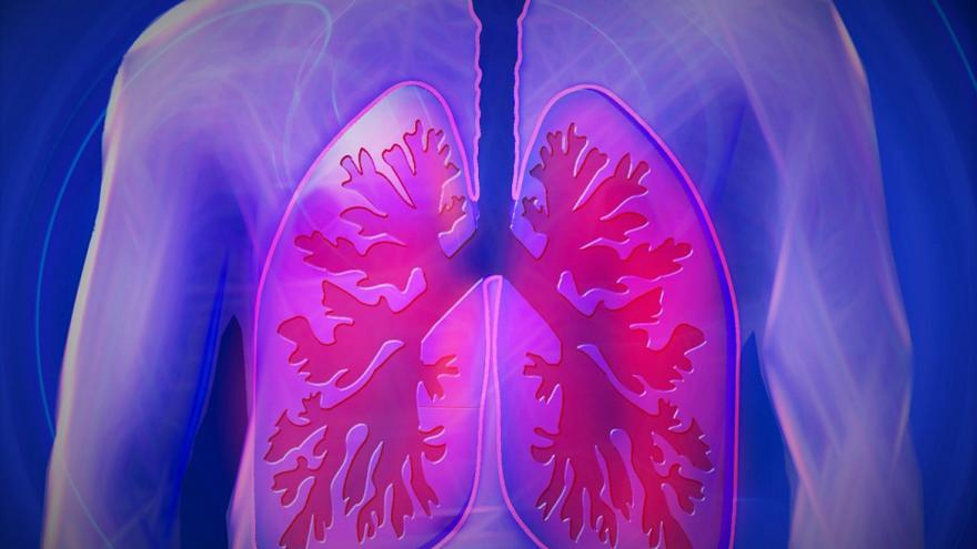 Pulmones humanos (dibujo)