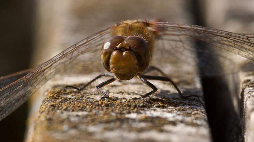 imagen de libélula