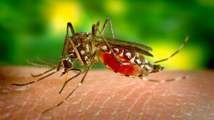Mosquito sobre la piel