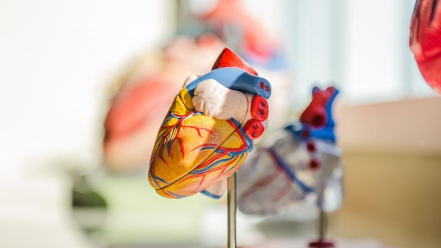 Maqueta de un corazón