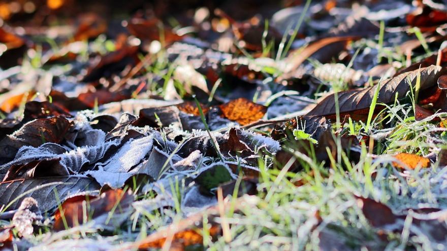 Hojas en el suelo cubiertas de escarcha
