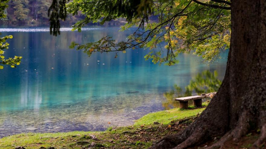 Lago azul desde la orilla con árboles en primer plano
