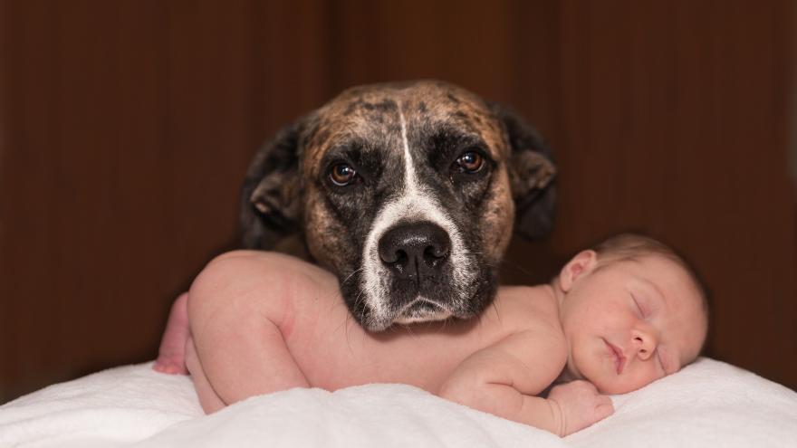 Perro con bebé