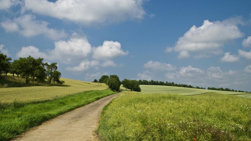 Camino en un prado