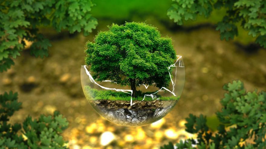 Formación medioambiental