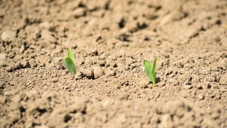 Imagen agricultura cereales