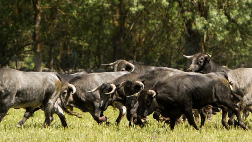 Toros de la ganadería Fernando Guzmán Guzmán