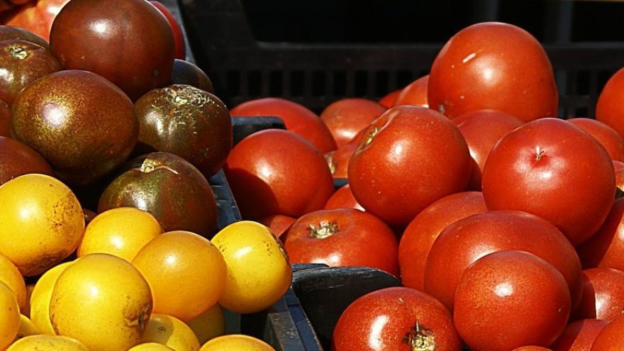 Tomates rojos negros amarillos