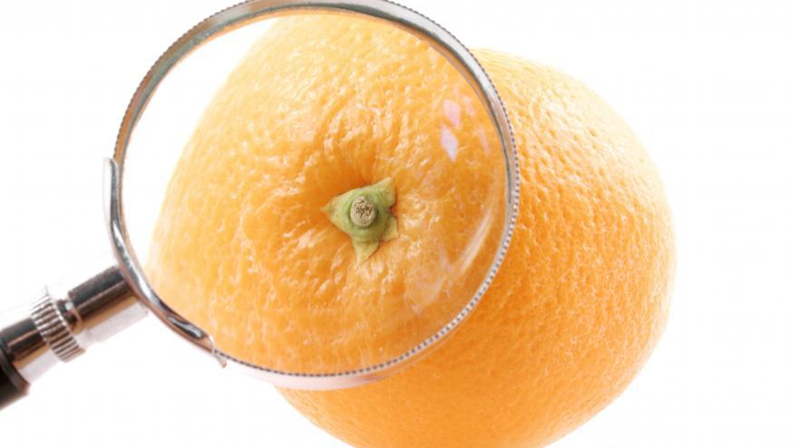 Lupa sobre una naranja