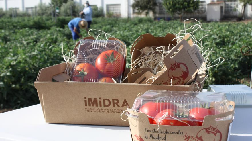 Tomates del IMIDRA
