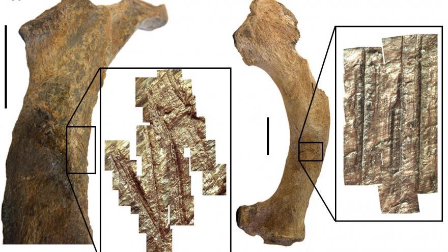 Una muestra de huesos fósiles