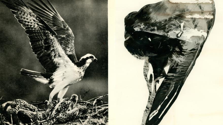 Láminas de ave