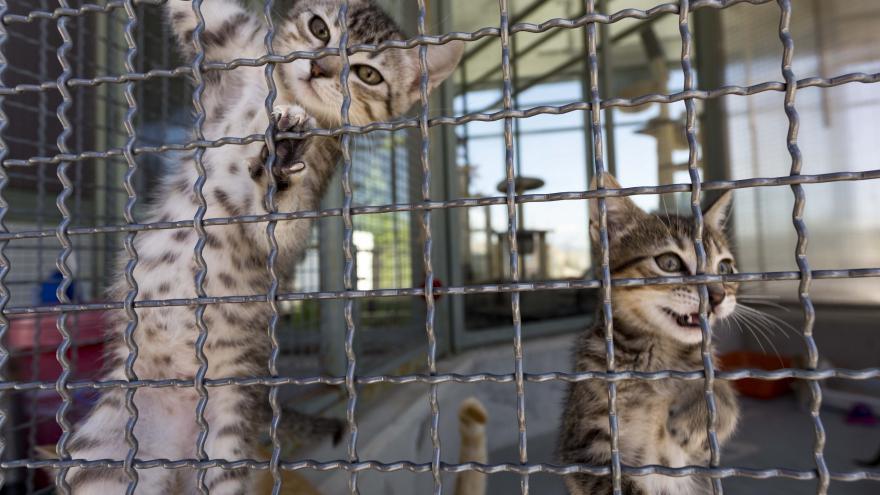 Una imagen del Centro Integral de Acogida de Animales (CIAAM) en Colmenar Viejo