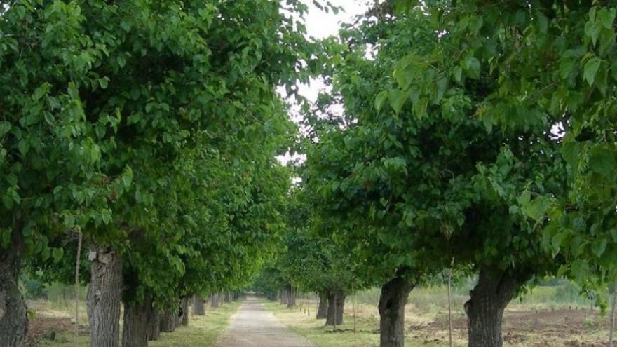 Camino de las Moreras en San Fernando de Henares