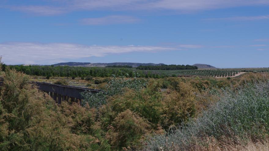 Humedales_Carrizal de Villamejor_Aranjuez