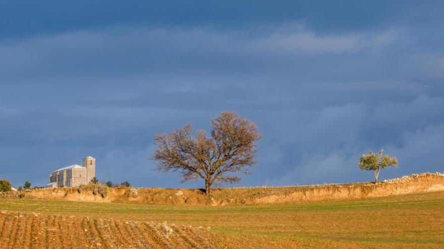 Imagen de campo