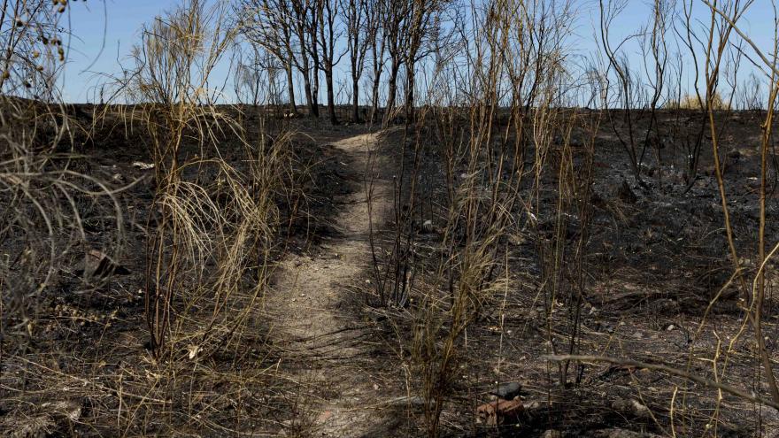 Bosque quemado