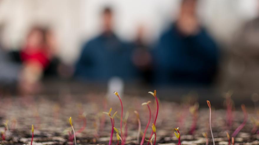 plantulas naciendo y al fondo siluetas de personas desenfocadas vestidas de azul