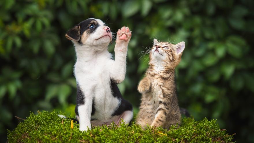 La Comunidad de Madrid refuerza la protección y bienestar de los animales de compañía