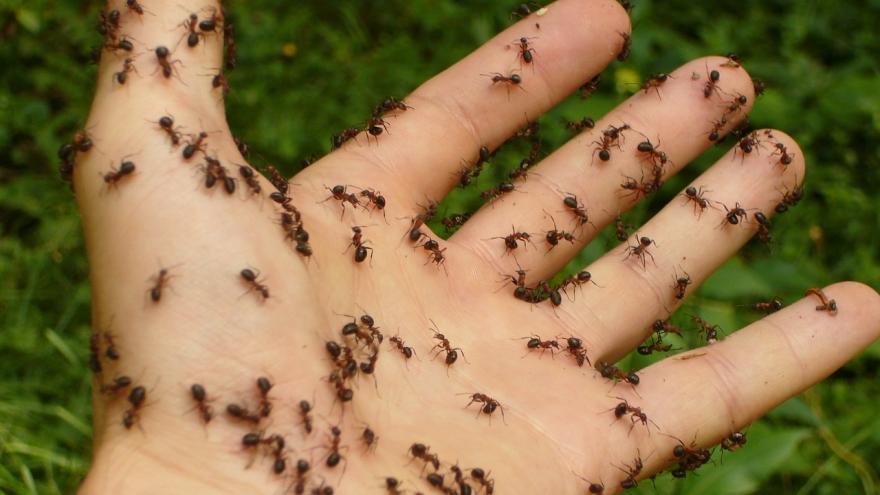Mano con hormigas