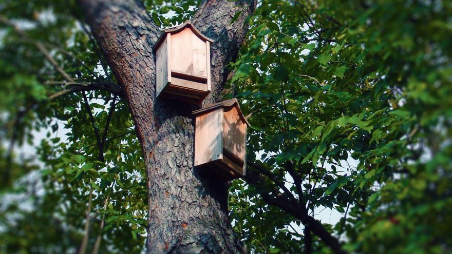 Cajas nido murciélagos