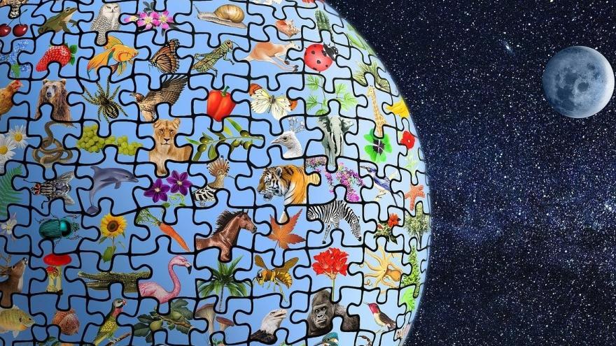 Planeta diversidad de especies