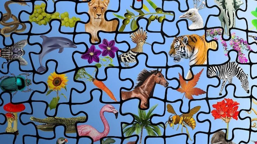 Dibujo especies biodiversidad