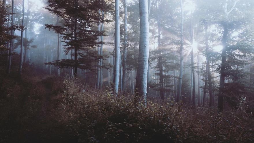 Bosque niebla