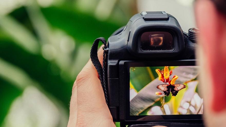 Fotografiando mariposa