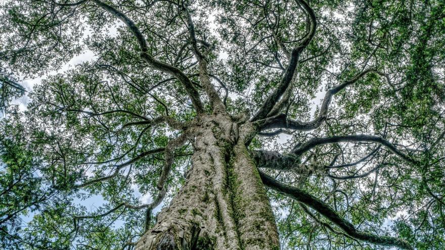 Imagen árbol ramas