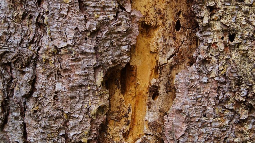 Corteza tronco árbol
