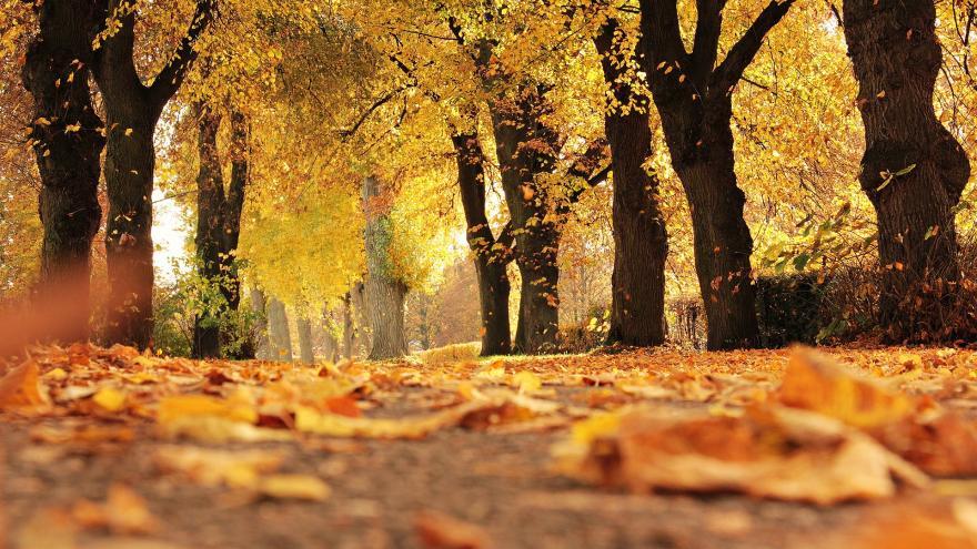 Imagen paseo arbolado otoño
