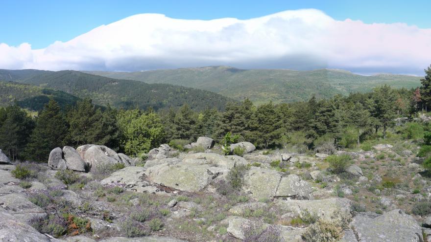 Imagen pinares Puerto Canencia