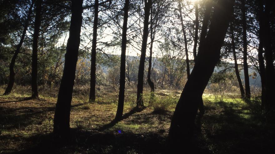 Árboles paisaje