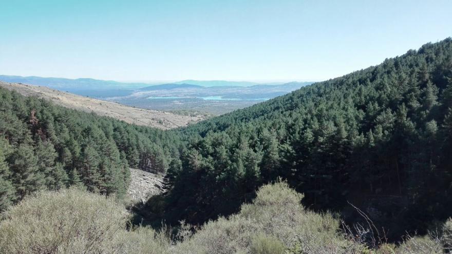 Vista del paisaje de pinares de la Senda por La Chorrera de San Mamés