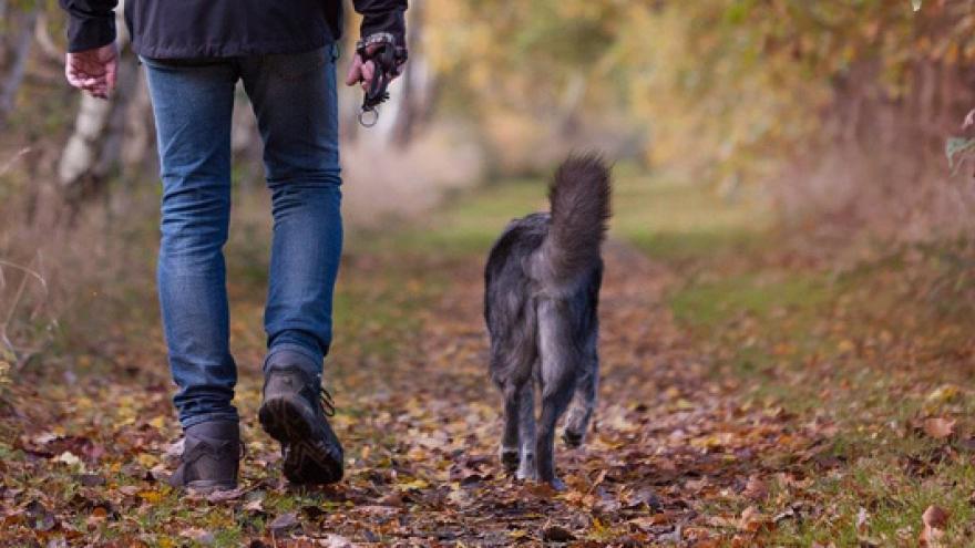 Preguntas más frecuentes de medio ambiente y animales de compañía ante el estado de alarma por el COVID-19