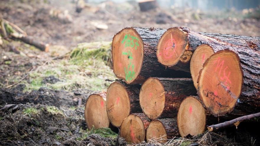 Troncos cortados señalados bosque