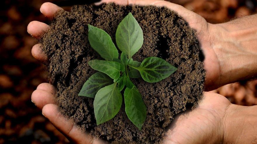 Manos sosteniendo tierra y planta