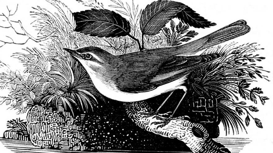 Pájaro grabado blanco y negro