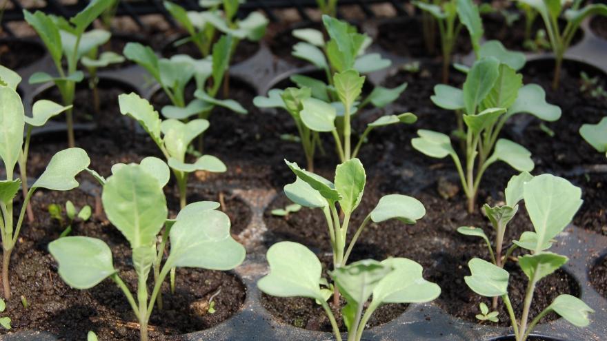 Planta semilleros