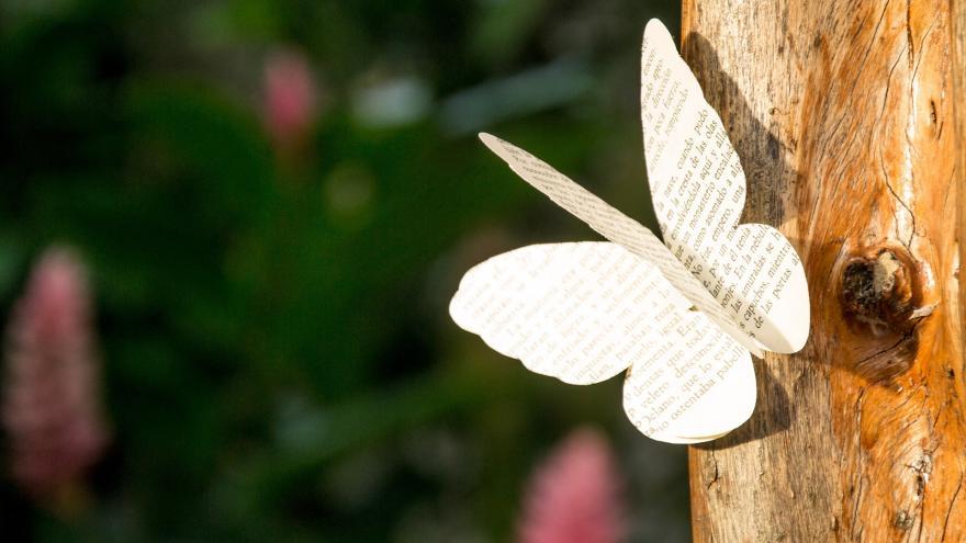 Poema con forma de mariposa en tronco y arbolado al fondo