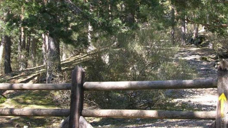 Vista de la senda por la Calzada borbónica, paisaje de pinares silvestres y barrera para control de acceso de vehículos