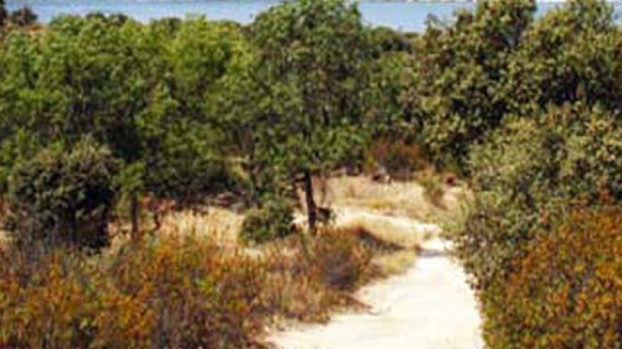 Vegetación arbustiva de la senda Colmenarejo a San Blas