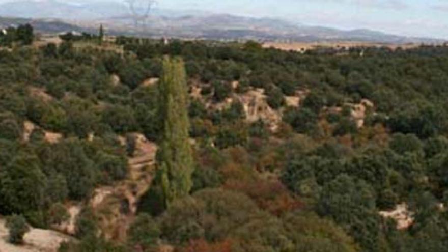 Encinares en la Senda de Boadilla del Monte a Villanueva de la Cañada