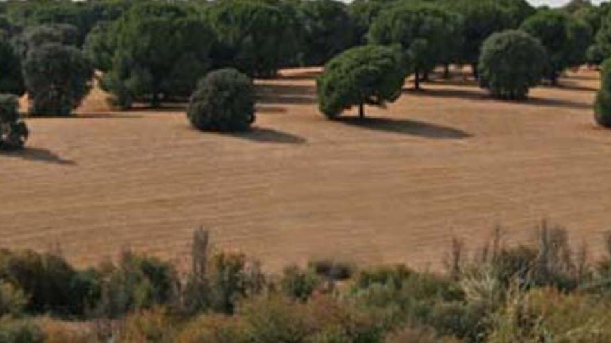 Paisaje de dehesas y pinares de pino piñonero en la Senda de Brunete al río Guadarrama