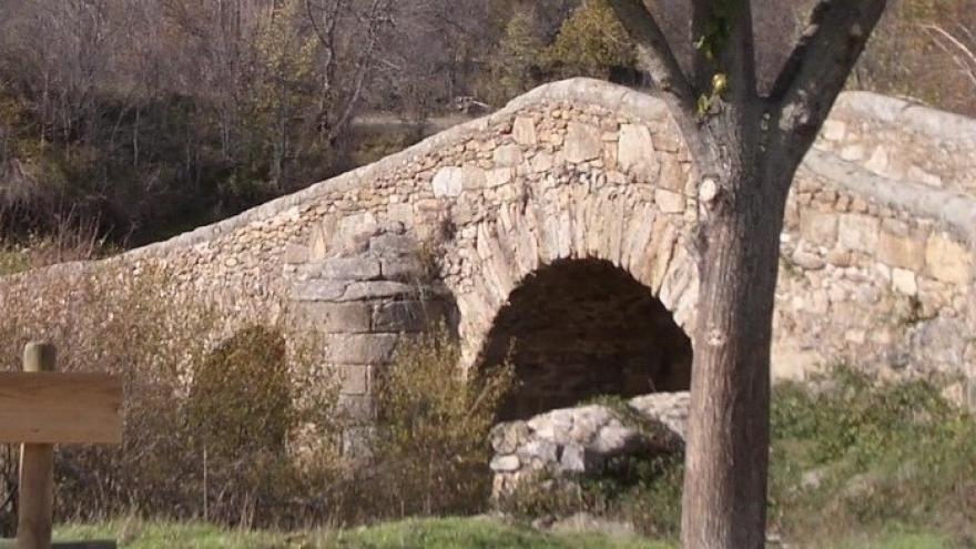 Puente árbol banco