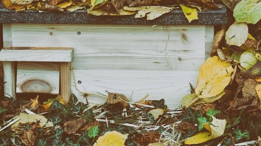 Refugio madera