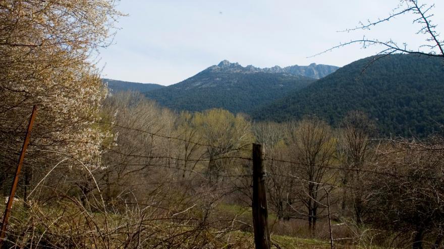 Montañas al fondo y árboles