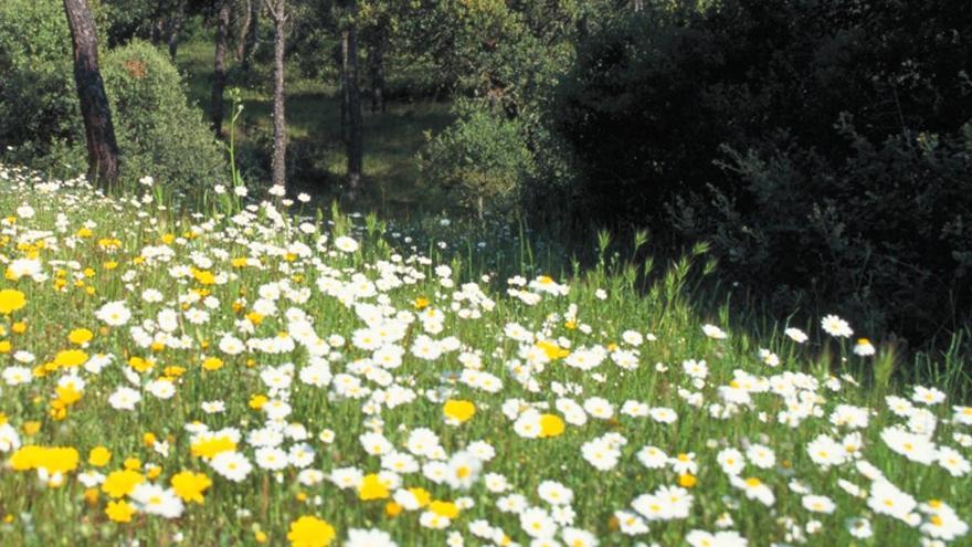 Sendas del Parque Regional del curso medio del río Guadarrama y su entorno
