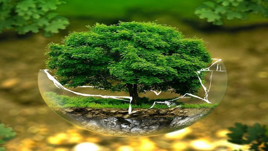 Montaje fotográfico de un árbol dentro de una copa de cristal